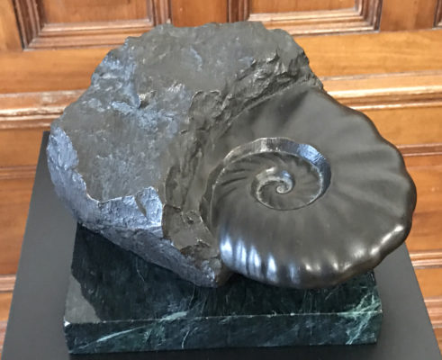 Jim Sardonis - Ammonite Model