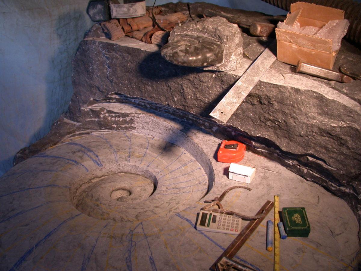 Jim Sardonis - Emmerging Ammonite